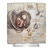 Leonardo: Human Fetus Shower Curtain