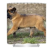 Leonberger Puppy Shower Curtain