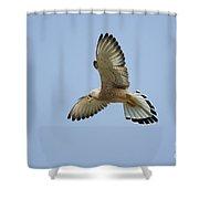 Lesser Kestrel Falco Naumanni Shower Curtain