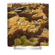 Lichened Rocks Shower Curtain