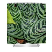 Light And Dark Green Leaves Shower Curtain