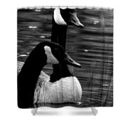 Lila Goose And The King 1b Shower Curtain