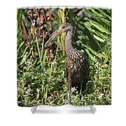Limpkin And Apple Snail Shower Curtain