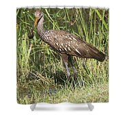 Limpkin In The Glades Shower Curtain