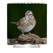 Lincoln Sparrow Shower Curtain