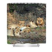 Lion Pride Shower Curtain