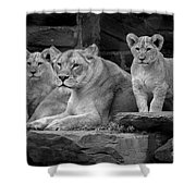 Lioness And Cubs Shower Curtain