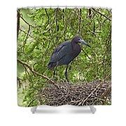 Little Blue Heron Nesting Texas Shower Curtain