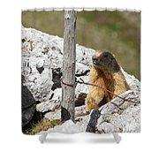 Little Marmot Shower Curtain