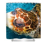 Loggerhead Sea Turtle Shower Curtain
