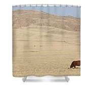 Lone Bull In Grassy Field Shower Curtain