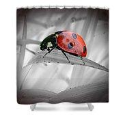Lone Ladybug Shower Curtain