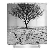 Lone Tree Winter Shower Curtain