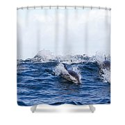 Long-beaked Common Dolphins Shower Curtain