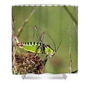 Long-horned Katydid Tettigonid Shower Curtain