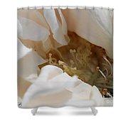 Long-stemmed White Rose Shower Curtain