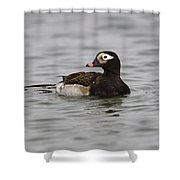 Longtailed Duck Shower Curtain
