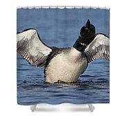 Loon Dance Shower Curtain