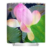 Lotus Lilly Shower Curtain