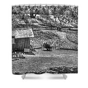 Lovers On Daffodil Hill 2  Shower Curtain