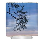 Low Angle View Of Tree At Dawn, Dark Shower Curtain