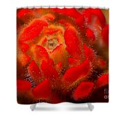 Indian Paintbrush Shower Curtain