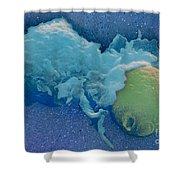 Macrophage Englufing Yeast Cell Shower Curtain