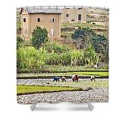 Madagascan Paddyfield Shower Curtain