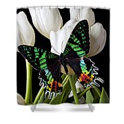 Madagascar Butterfly Shower Curtain