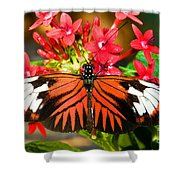 Madeira Butterfly Shower Curtain