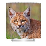 Magical Bobcat Shower Curtain