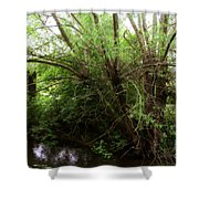 Magical Tree In Forest Shower Curtain