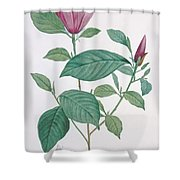 Magnolia Discolor, Engraved By Legrand Shower Curtain