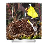 Male American Goldfinch Shower Curtain