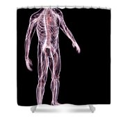Male Anatomy Shower Curtain