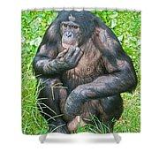 Male Bonobo Shower Curtain