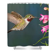 Male Broad-tailed Hummingbird Shower Curtain