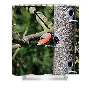 Male Bullfinch Shower Curtain
