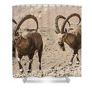 Male Nubian Ibex Shower Curtain