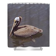 Male Pelican Shower Curtain