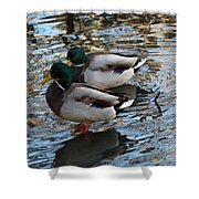 Mallard Drakes  Shower Curtain