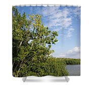 Mangrove Forest Shower Curtain by Carol Ailles