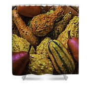 Many Colorful Gourds Shower Curtain