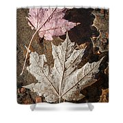 Maple Leaves In Water Shower Curtain