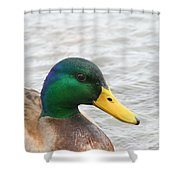 March Mallard  Shower Curtain