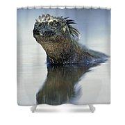 Marine Iguana Galapagos Islands Shower Curtain
