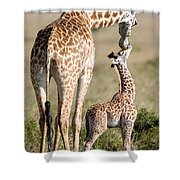 Masai Giraffe Giraffa Camelopardalis Shower Curtain
