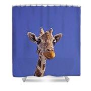 Masai Giraffe, Serengeti, Africa Shower Curtain