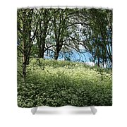 Meadow And Trees In Spring. Vitabergsparken, Stockholm, Sweden. Shower Curtain