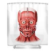 Medical Illustration Of Male Facial Shower Curtain